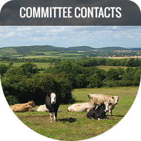 Committee Contacts